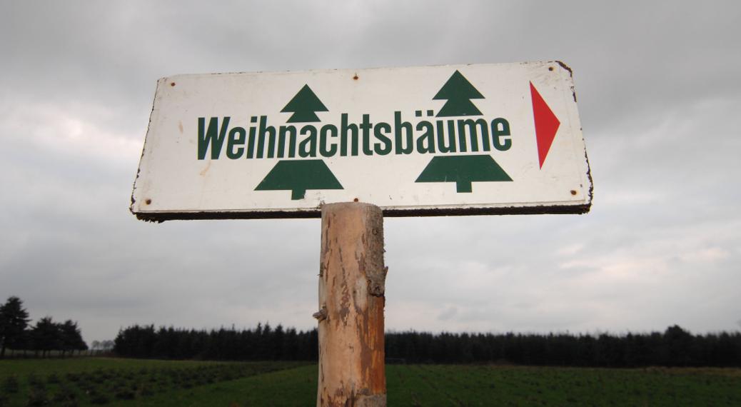Weihnachtsbaumschlagen am Niederrhein