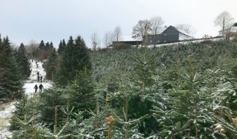 "Saying ""thank you"" from a distance: cutting the Christmas tree"