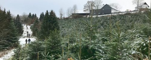Christmas-tree-cutting