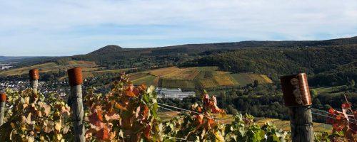 Der Firmen-Familientag auf einem idyllischen Weingut