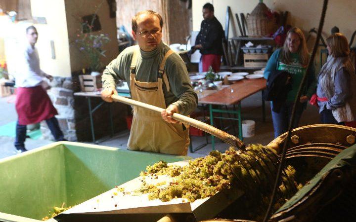 Erntehelfer im Weinberg bei der Weinlese | Teambuilding