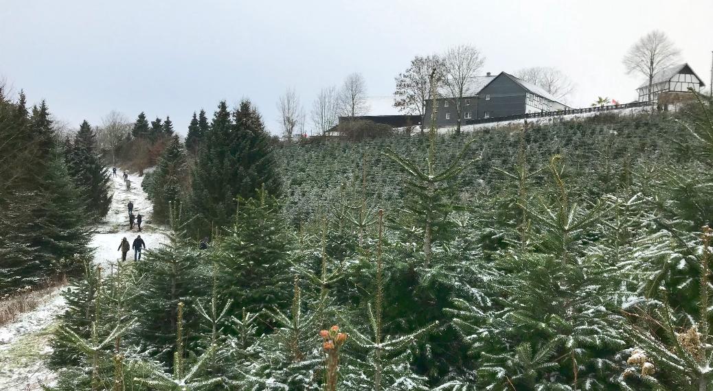 Weihnachtsbaum Drive-In